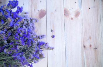 lavendelolie online kopen
